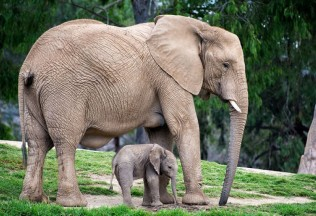 animals-with-cute-babies-a-27