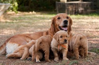Canine-Maternal-Instincts